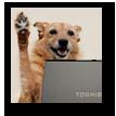 Doggycam